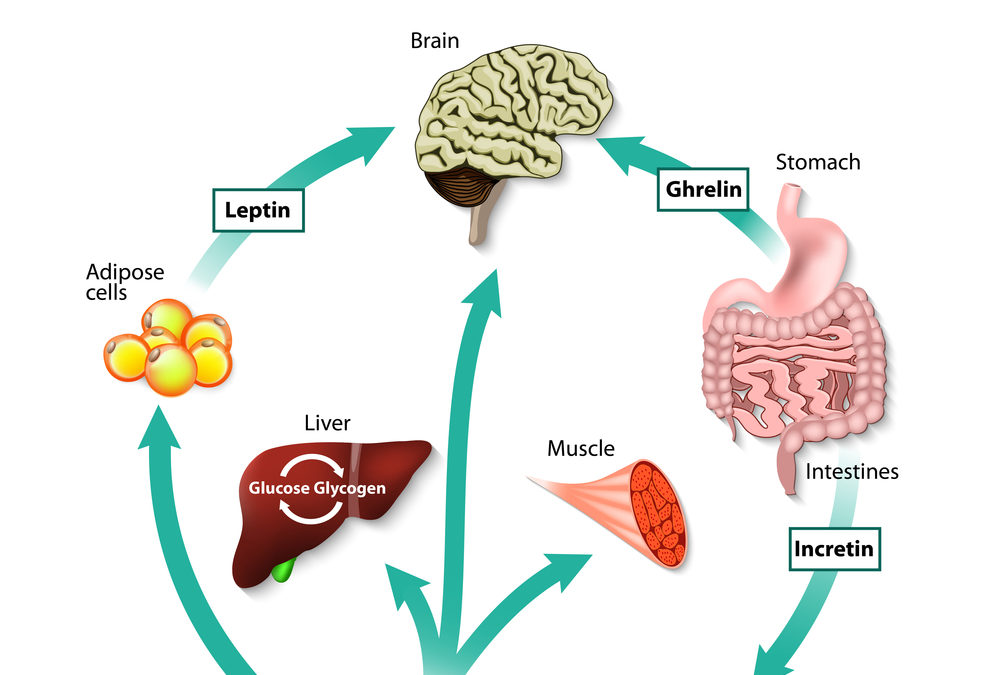 Making Leptin Work For Your Weight Loss